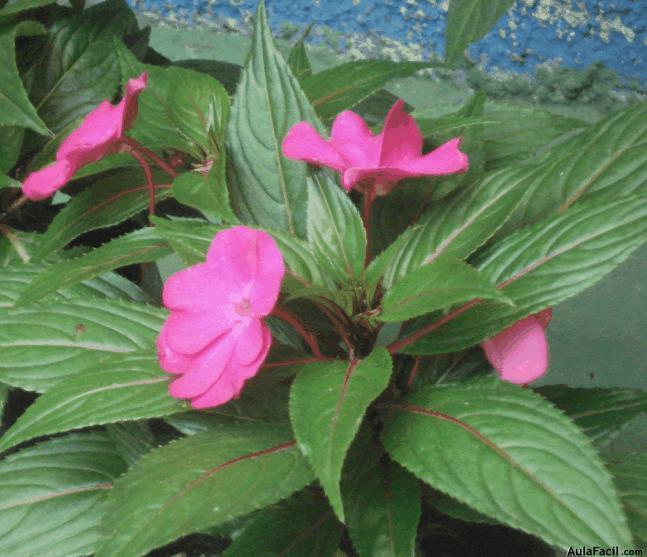 Curso de jardiner a plantas florales permanentes cursos for Aprender jardineria